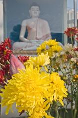 Buddha Statue and Flower