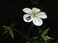 Bug on Beauty