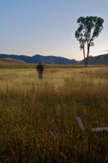 National Elk Refuge at Dusk