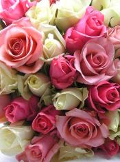 romantic roses display