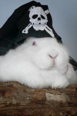 Jolly rodger Bunny