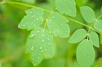 Lush Green Leaves
