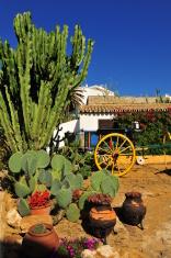 Cacti garden, Praia da Luz, Algarve, Portugal