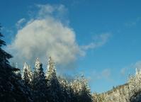 Winter White Wonderland