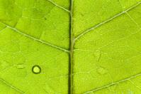 Macro of leaf shallow DOF
