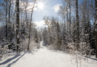 Sunny Snowmobile Trail