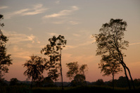 Treescape at dusk