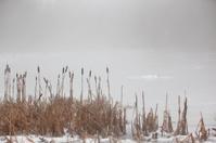 Winter lake in mist