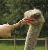 Ostrich & Finger