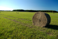 Fresh Hay harvest
