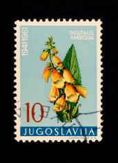 Postage Stamps: Digitalis ambigua (Jugoslavia)