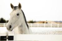 Female Apendix Horse