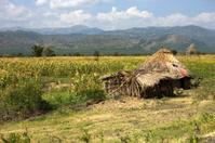 Ethiopia Rural hut