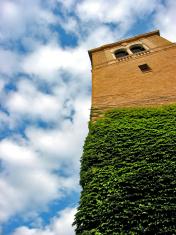 Vine Tower