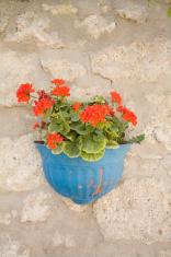 red flowers in blueflowerpot