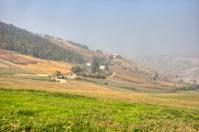 Italian vineyard and fields
