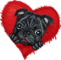 Black Pug in red heart