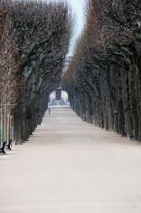 Morning Run Winter Paris France