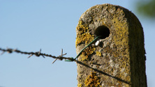 Post with lichen on it