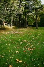 Fall Leaves Green Grass Trees Oregon