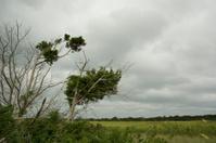 Storm clouds over salt marsh.