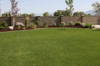 Yard Landscape