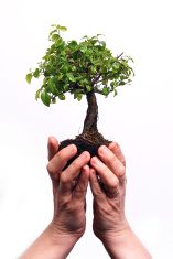 Hands holding a Bonsai tree