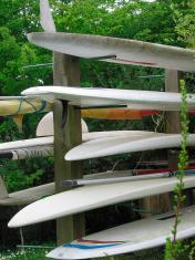 surfing tree
