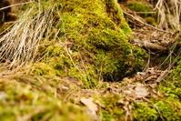 Spring's moss