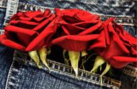 Red Roses in bluejean pocket