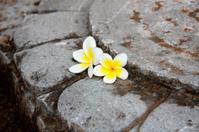 Stones with frangipani