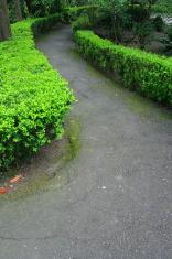 Road In A Garden