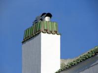 Green Tile Chimney