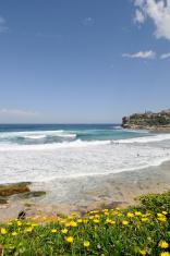 Bronte Surfers