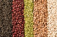 bean rows
