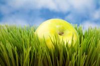 Green Apple on Grass