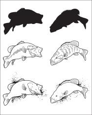 Fish Series - Bass