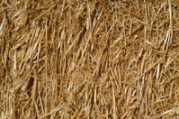 Straw or Hay Background