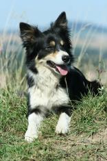 Nice dog looking