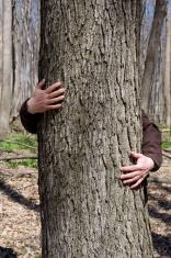 Tree hugger environmentalist - two male hands