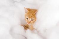 Yellow kitten in fluffy fake snow