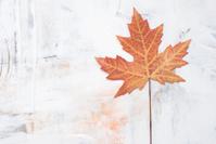 leaf on painted background