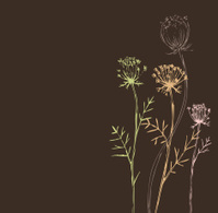 Brown Weeds_Queen Annes Lace
