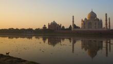 Dog admiring Taj Mahal at Sunrise, Agra, India