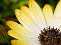 Quarter of a daisy.