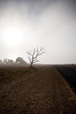 Eerie tree roadside misty dawn