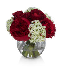 Red Peony bouquet with white background