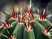 Cactus Detail 2