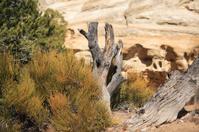 desert plants and sandstone