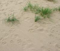 Arena de playa y hierbas